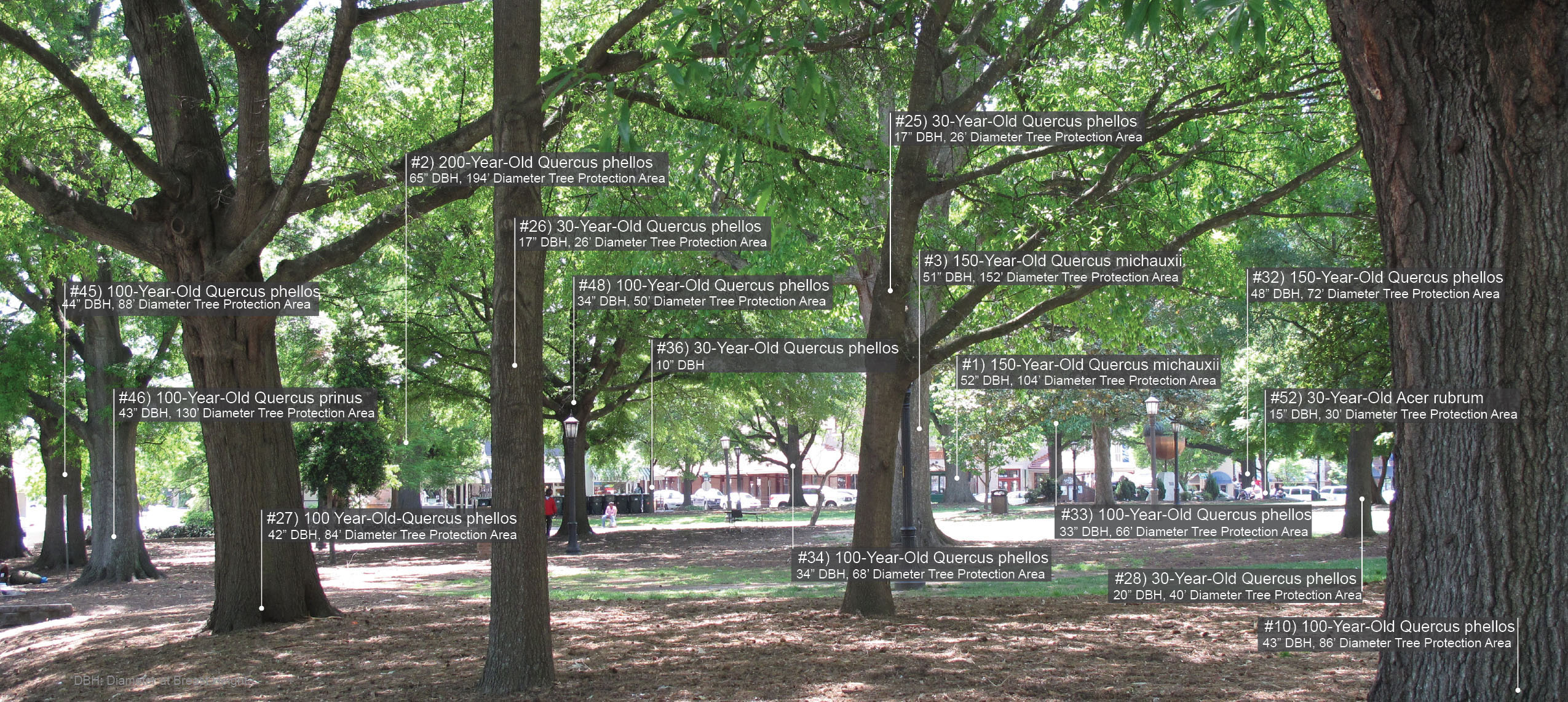 Download Hi-Res Image : urban tree canopy - memphite.com