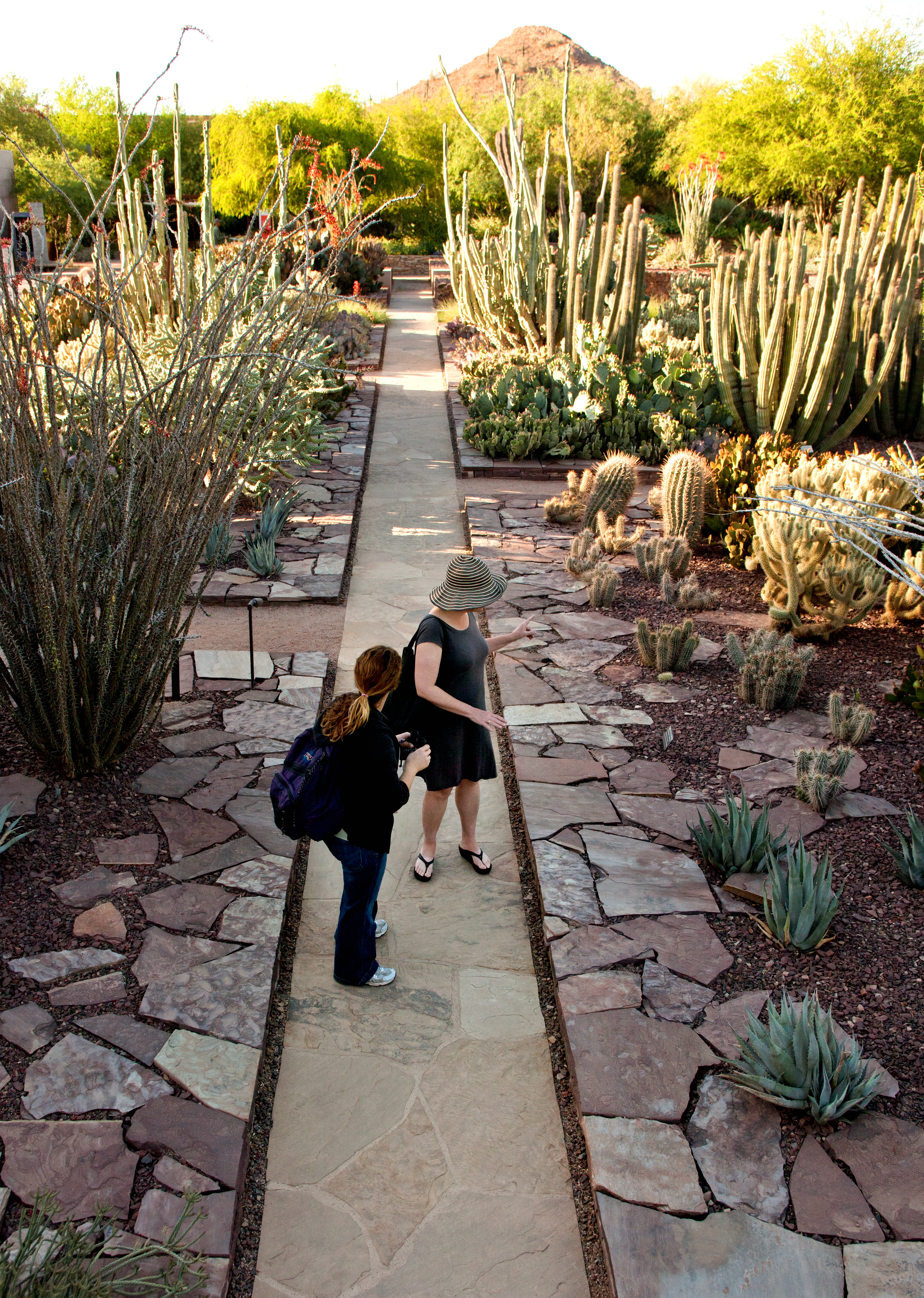 download hi res image - Desert Botanical Garden Phoenix