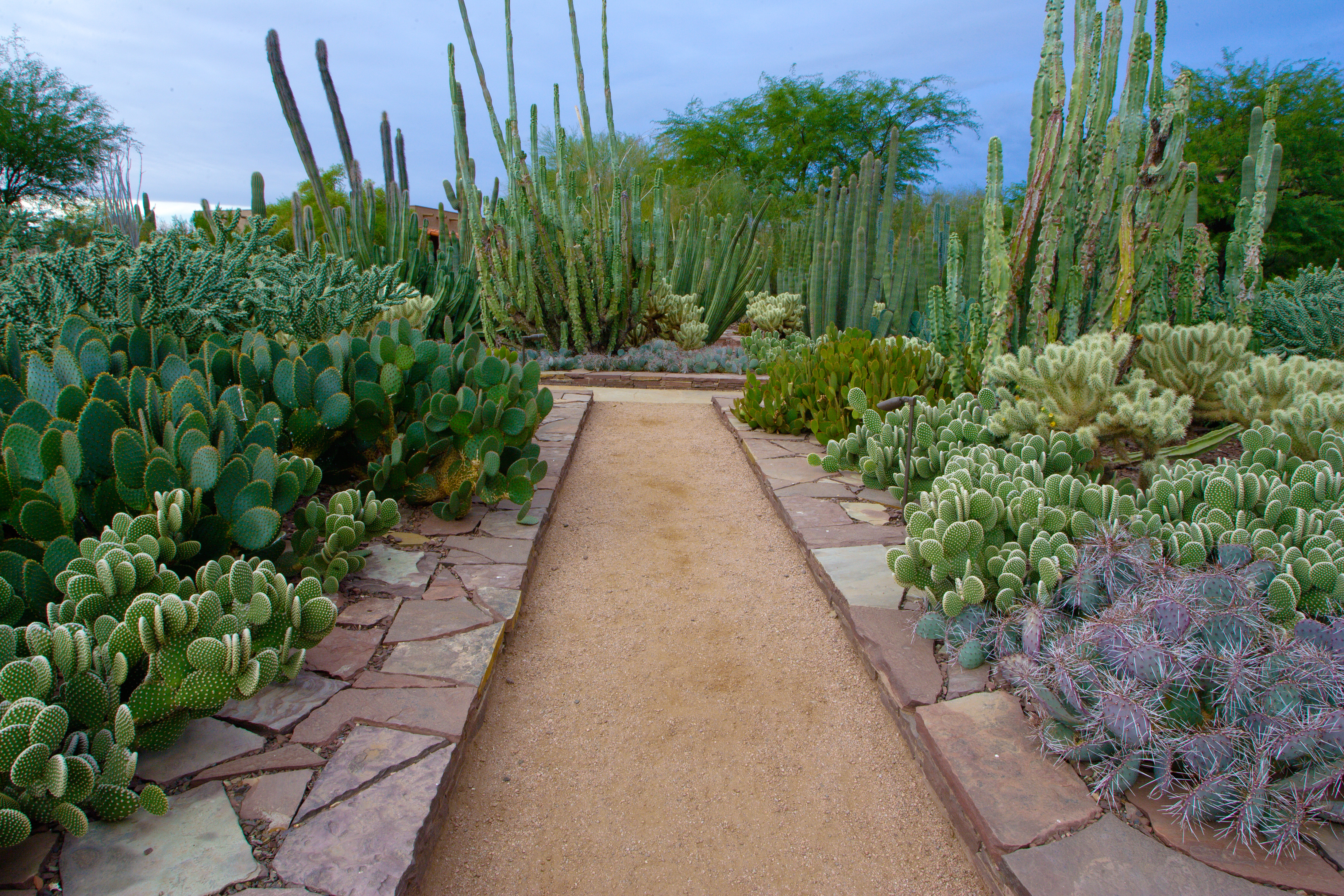 ASLA 2013 Professional Awards | Ottosen Entry Garden, Desert ...