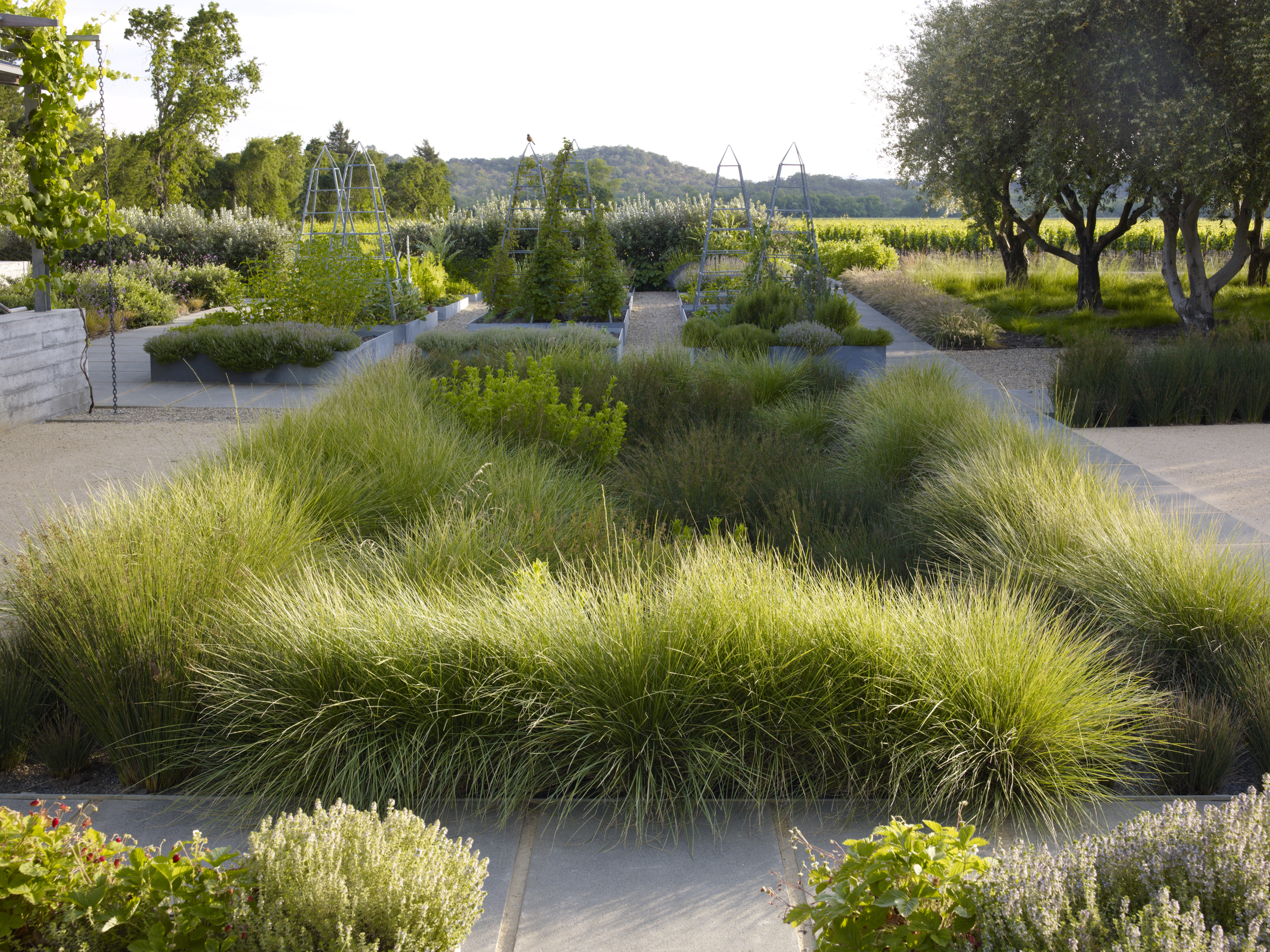 Small vegetable garden plans ideas - Asla 2013 Professional Awards Medlock Ames Tasting Room And