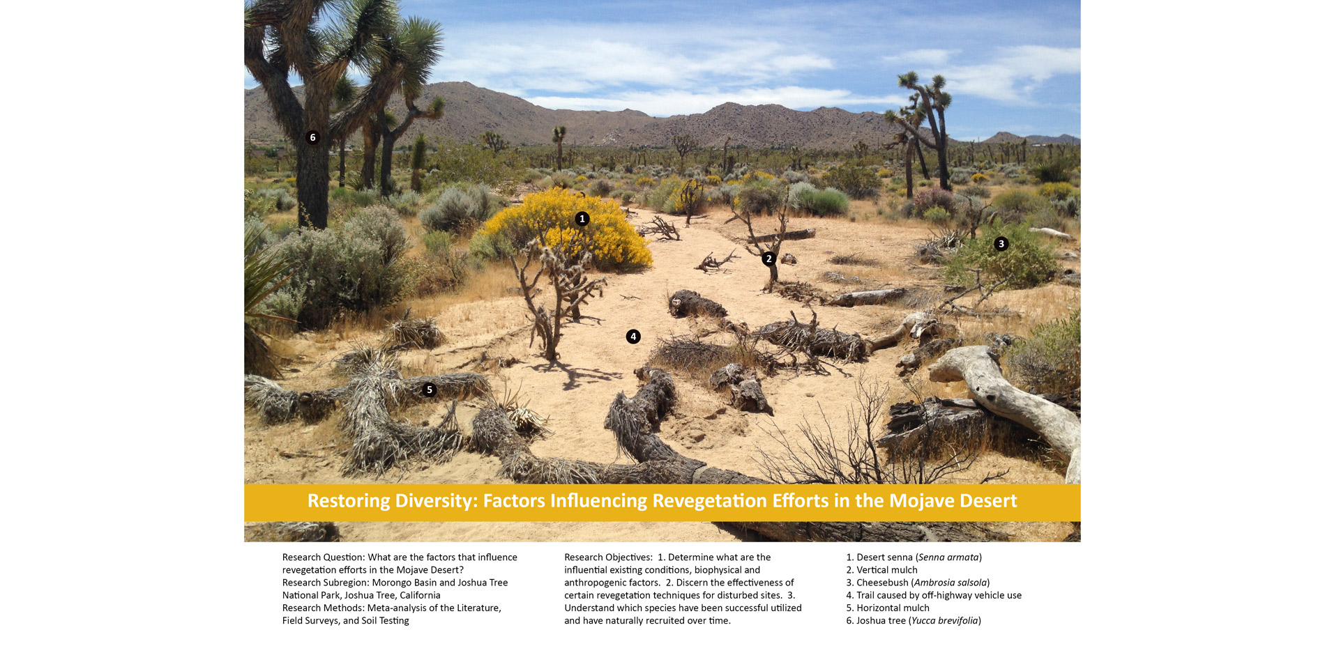 Restoring Diversity: Factors Influencing Revegetation Efforts in the