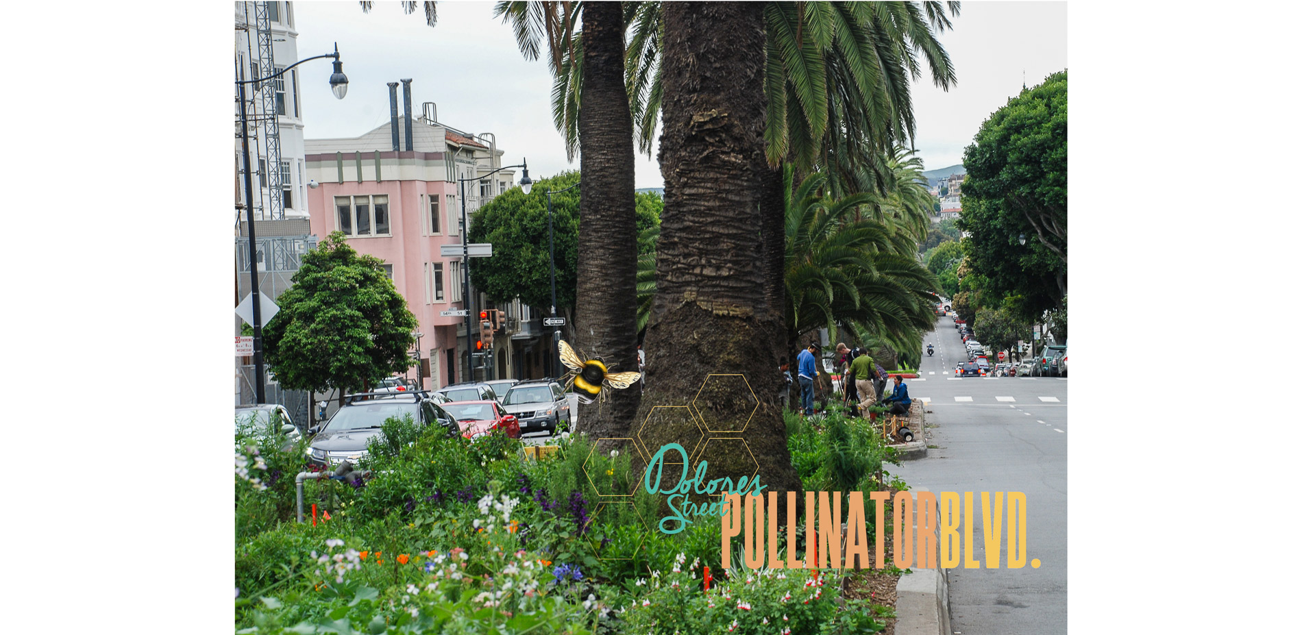 Dolores Street Pollinator Boulevard | 2018 ASLA Student Awards