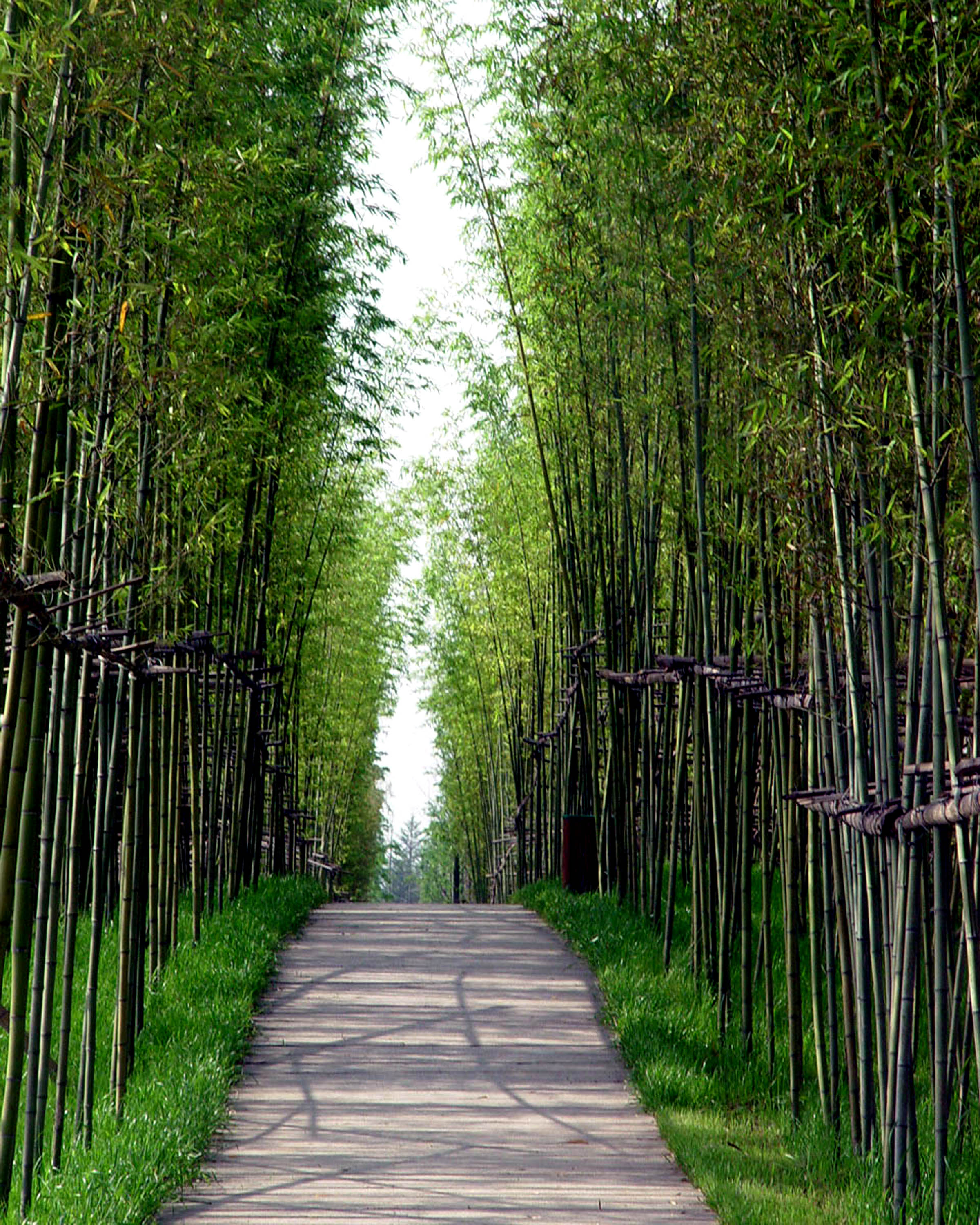 Nj Bamboo Landscaping: 1000+ Ideas About Landscape Materials On Pinterest