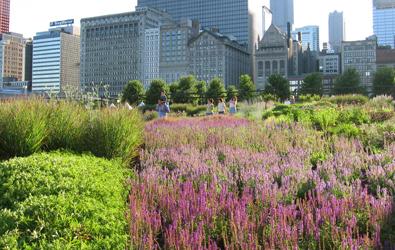 Landscape Architecture - Your Environment. Designed.