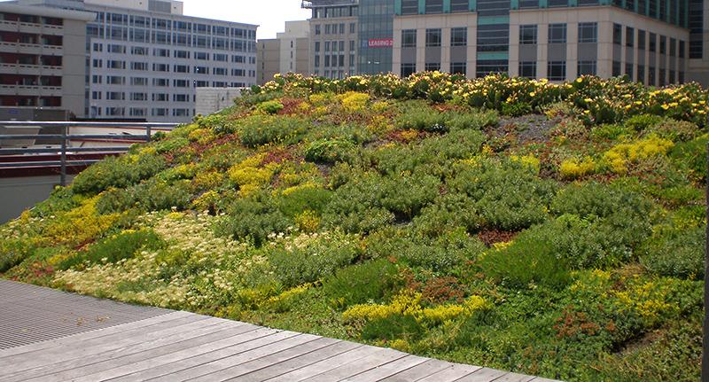 Seedum Roof Amp Zoom Sedum Blanket 1411376772 Jpg