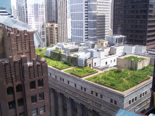 johnson green roof 2016