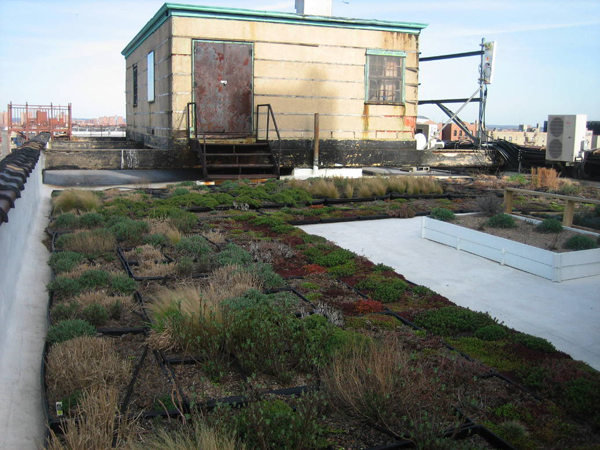 carter_greenroof2