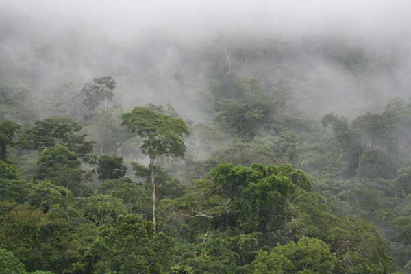 benyus_rainforest