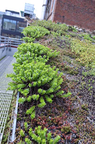 ASLA green roof spring 2014