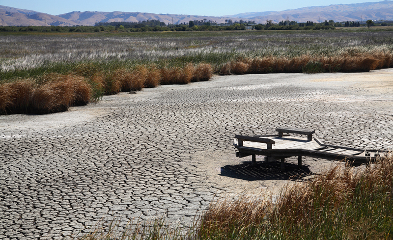 combating climate change with landscape architecture