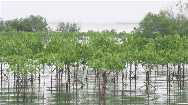 Resilient Design: Biodiversity Loss   asla.org