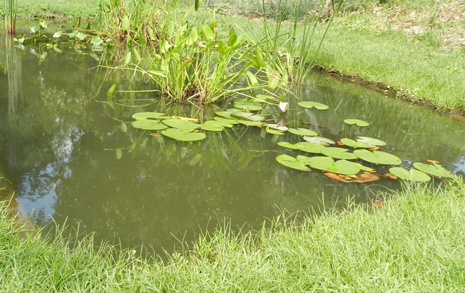 Kenilworth park and aquatic gardens the landscape for Garden pool ecosystem