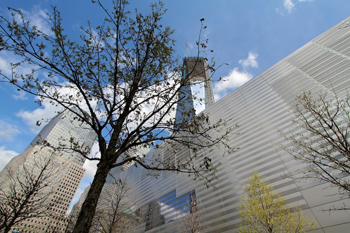 Bartlett - Tree and Freedom Tower